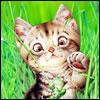 http://awatarky.narod.ru/animals23file.jpg