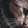 http://awatarky.narod.ru/animals4file.jpg