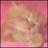 http://awatarky.narod.ru/cat35.jpg