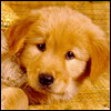 http://awatarky.narod.ru/dog.jpg